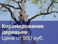 Коронирование деревьев